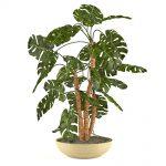 Zimmerpflanze grün