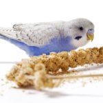 Hirse Getreide Vogel