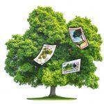 Briefmarkenbaum