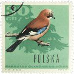 Eichelhäher Briefmarke Polen