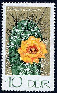 Briefmarke Kaktus