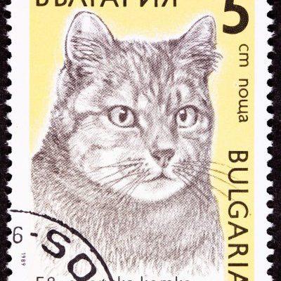 Briefmarke Katze Bulgarien