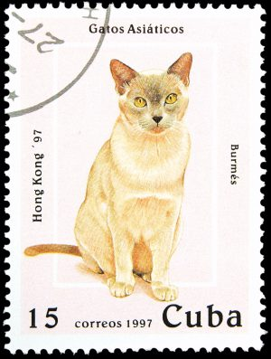 Briefmarke Katze Kuba