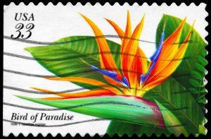 Briefmarke Paradiesvogelblume