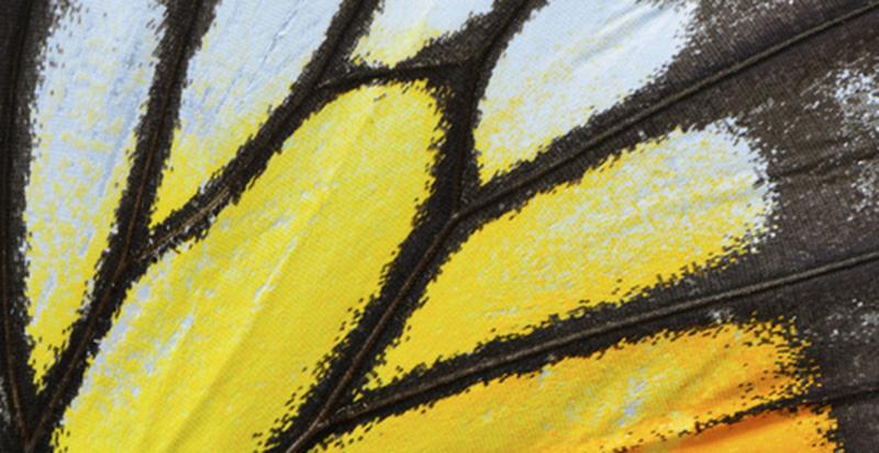 Schmetterlinge Flügel
