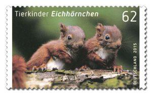 Tierkinder Eichhörnchen