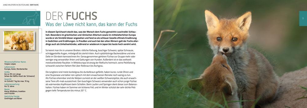 """Tierbabys: Innenseite des Buchs """"Junge Wildtiere in Deutschland"""""""