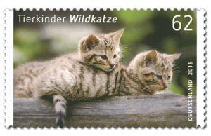 Tierkinder Wildkatzen
