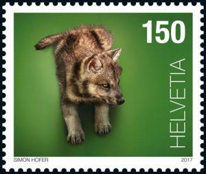 Wolf Tierkind