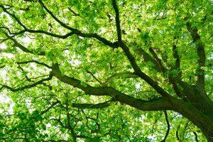"""Der Baum als """"Urvater"""" der Briefmarke"""