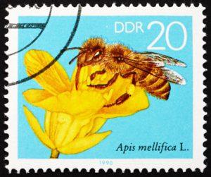 Bienen-Briefmarke DDR