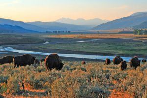 Reisen im Kopf: Go west – Lamar Valley in Wyoming, ©htnr / fotolia.com