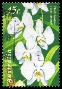 Orchideen Briefmarke Australien
