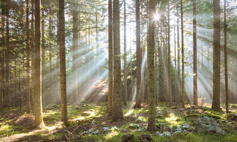 Sonnenlicht Baum