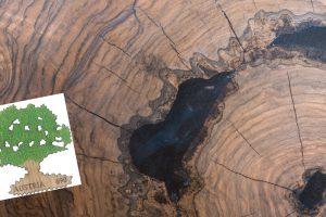Eiche mit Holzbriefmarke (© skrotov - shutterstock.com)