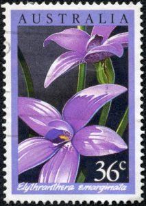 Lila Orchidee auf Briefmarke aus Australien