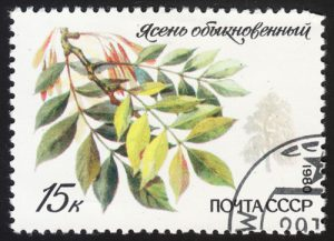 Baum Esche auf Briefmarke
