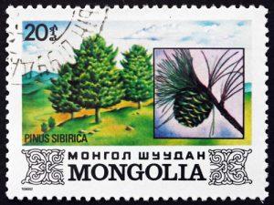 Baum: Kiefer auf Briefmarke