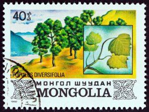 Baum: Pappeln auf Briefmarke