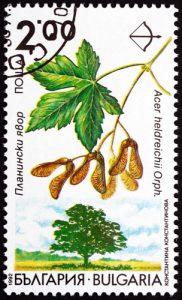 Baum: Ahorn auf Briefmarke