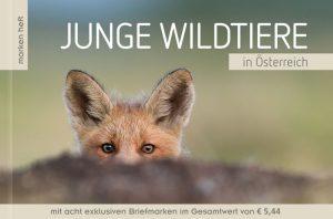 Junge Wildtiere in Österreich