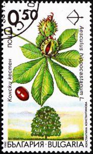 Baum: Kastanie auf Briefmarke