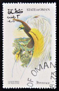 Kleiner Paradiesvogel auf Briefmarke aus Oman