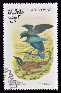 Kragen-Paradiesvogel auf Briefmarke aus Oman