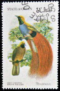 Schmuck-Paradiesvogel auf Briefmarke aus Oman