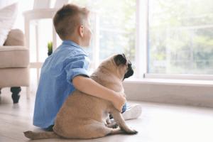 Haustiere sind treue Freunde