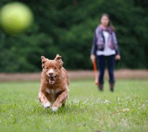 Hunde animieren zu Bewegung im Freien