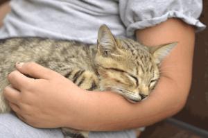 Haustiere sind Freunde zum Kuscheln