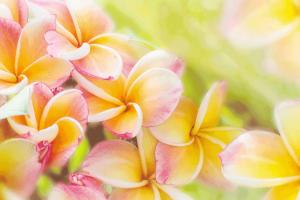 Bunte-Exotische-Blumen