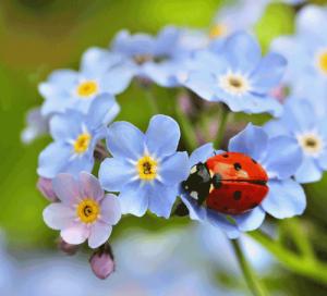Frühling bringt Farbe