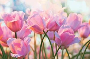 Wunderschöne Farben auf Postkarten