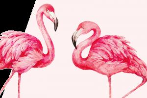 Rosa-Kult-Flamingos