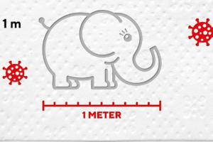 Der Babyelefant auf der Corona-Briefmarke