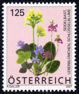 Blumen im Frühling, 2007