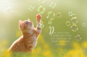 Philosophisches auf Katzenpostkarten